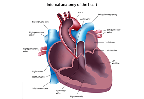 Heart Structure Tests